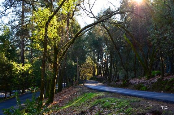 Tree Drive.tif