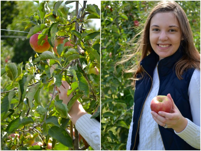Apple Picking 2017-1