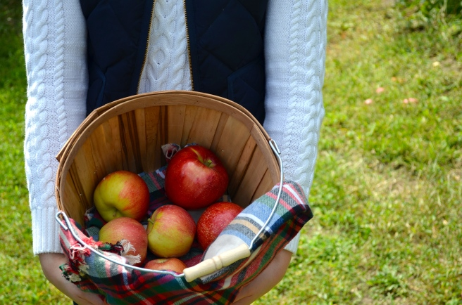 Apple Picking_0907