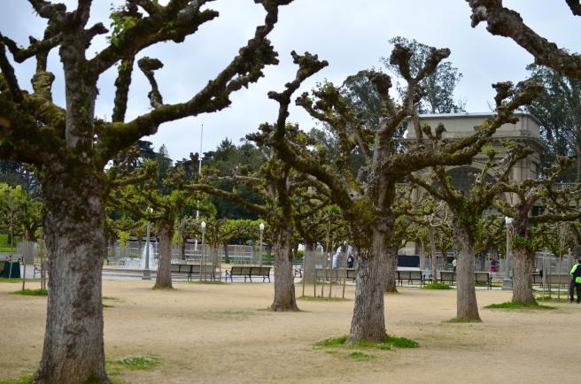 Golden Gate Park_0400.JPG